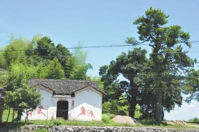 禹王庙和古树