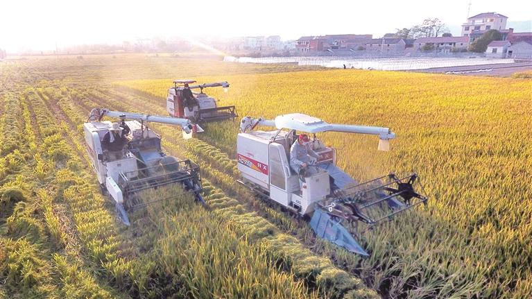 家庭农场�ylez)�9b$_家庭农场迈向农业现代化
